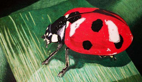 Marienkäfer malen mit Prismacolor Buntstiften