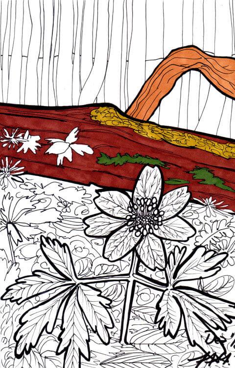 Postkarte Waldblume Touch Twin Markerkolorierung 1