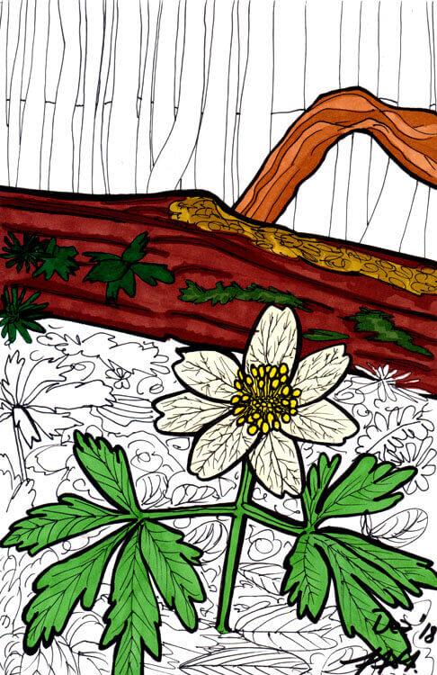 Postkarte Waldblume Touch Twin Markerkolorierung 3