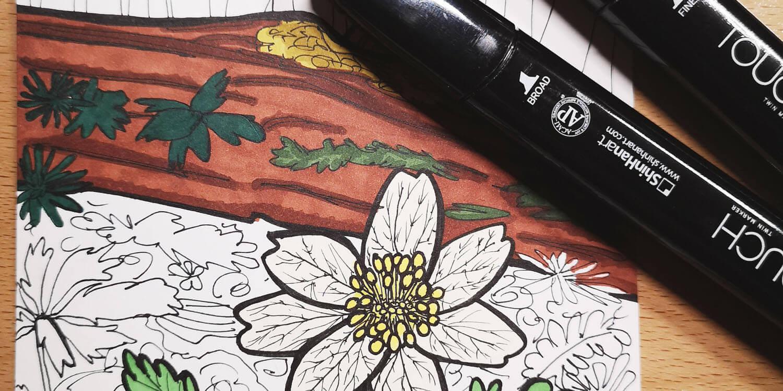 Buschwindröschen mit Markern malen Titelbild
