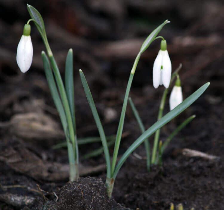 Fotovorlage zum Abzeichnen: Frühling
