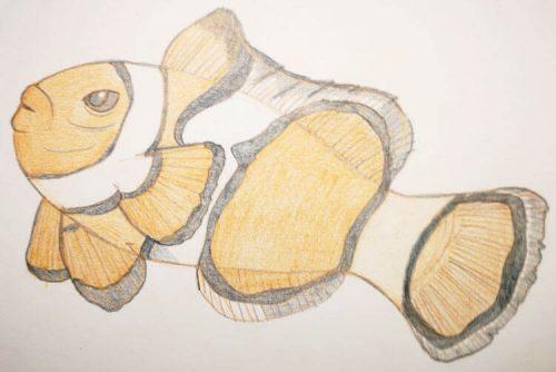 Buntstiftzeichnung Sternzeichen Fische Clownfisch 3