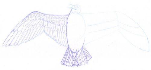 Möwe und Vogelflügel zeichnen mit Eno Color