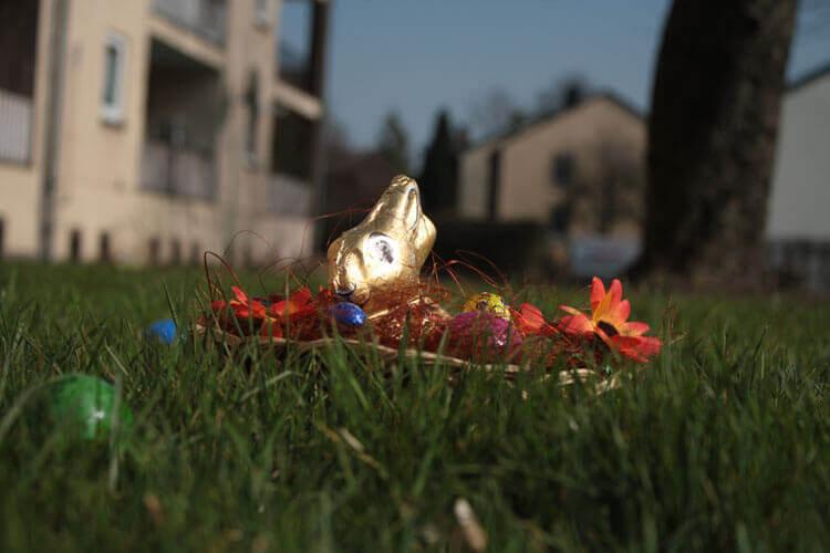 Fotovorlage zum Abzeichnen: Osterhase im Osternest 3