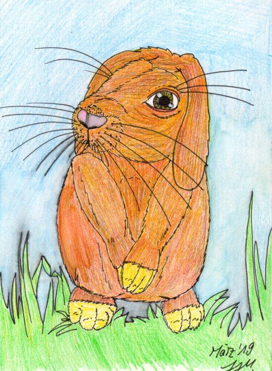 Postkarte: Kaninchen Version 1 ist missglückt
