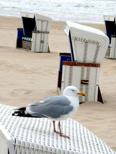 Nordseeküste Fotovorlage zum Abzeichnen Möwe auf Strandkorb 1