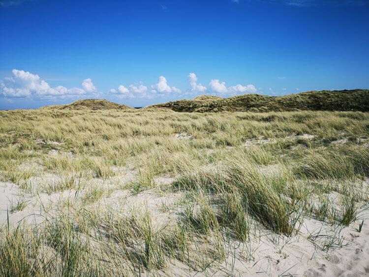Düne mit Sandstrand am Meer 6