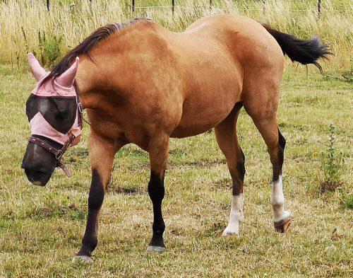 Fotovorlage zum Abzeichnen - Pferd steht auf Wiese 3