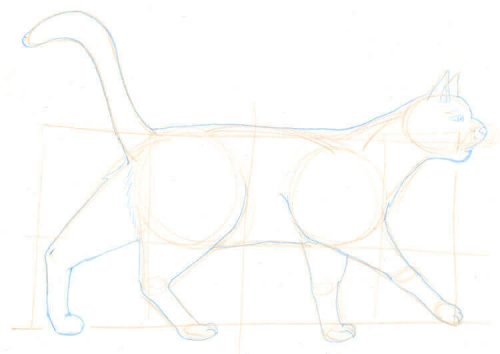Katze zeichnen: Bleistiftskizze 2