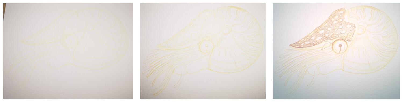 Nautilus malen mit Aquarellbuntstift in einzelnen Schritten