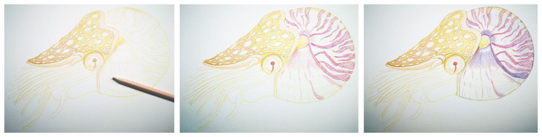 Nautilus malen mit Aquarellbuntstift in einzelnen Schritten 2
