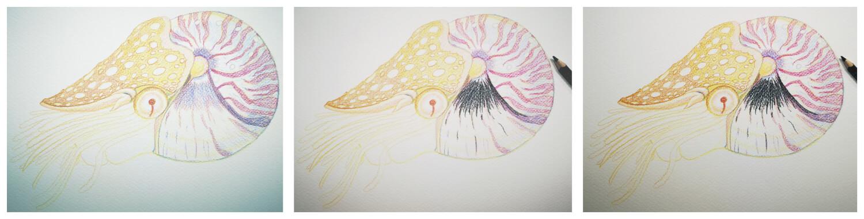 Nautilus malen mit Aquarellbuntstift in einzelnen Schritten 3