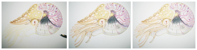 Nautilus malen mit Aquarellbuntstift in einzelnen Schritten 4