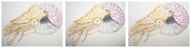 Nautilus malen mit Aquarellbuntstift in einzelnen Schritten 5