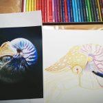 Nautilus malen mit Aquarellbuntstiften