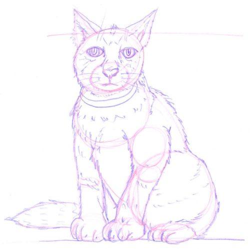 Sitzende Katze zeichnen: Bleistiftskizze 2