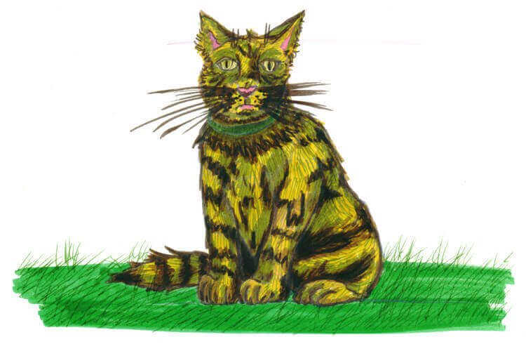 Katze mit Filzstift malen - sitzend