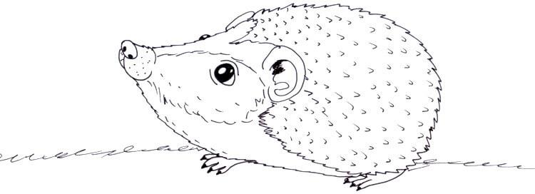 Niedlichen Igel zeichnen & Ausmalbilder