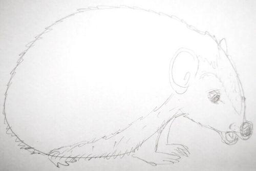 Igel zeichnen: Bleistiftskizze 1