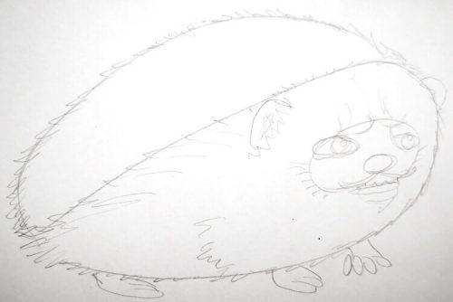 Igel zeichnen: Bleistiftskizze 2