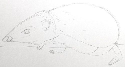 Igel zeichnen: Bleistiftskizze 4