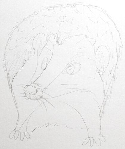 Igel zeichnen: Bleistiftskizze 5