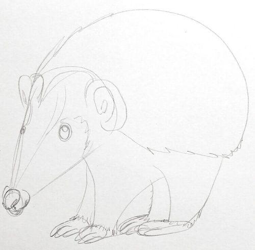 Igel zeichnen: Bleistiftskizze 6