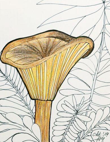 Aquarell Pilz malen: Kolorierung Schritt 1
