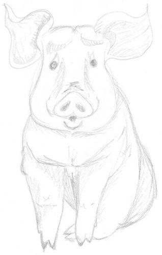 Skizze: sitzendes Schwein zeichnen