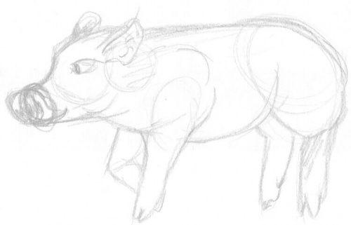 Skizze: stehendes Schwein zeichnen