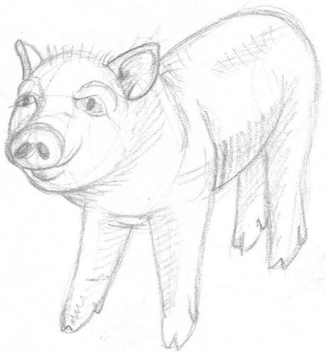 Süßes Schweinchen zeichnen
