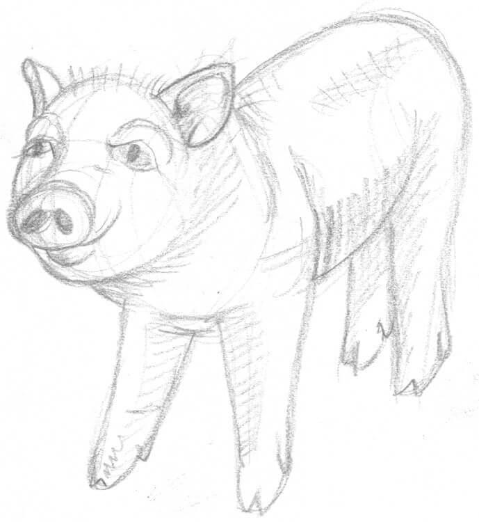 Schweine zeichnen – Anleitung für Kinder und Einsteiger
