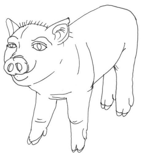 süßes Schweinchen Zeichnung