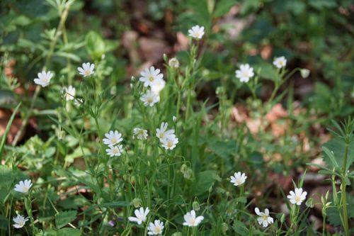 Waldblumen Fotovorlagen zum Abzeichnen 1