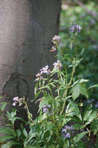 Waldblumen Fotovorlagen zum Abzeichnen 2