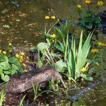 Waldblumen Fotovorlagen zum Abzeichnen
