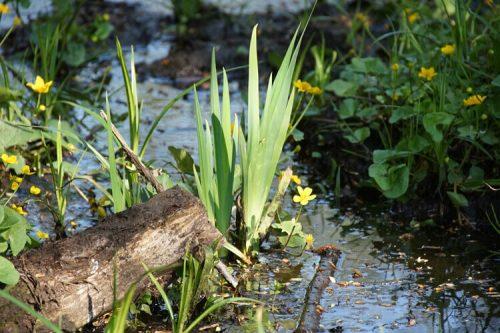 Waldblumen im Teich 2