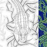 Krokodil zeichnen und malen