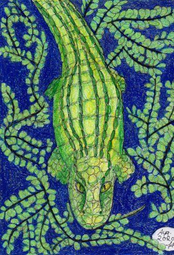 Krokodil fertige Buntstiftzeichnung