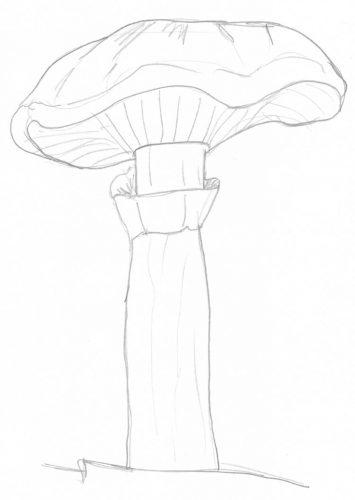 Pilze zeichnen: Beispiel Pfifferling