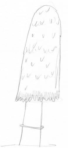 Pilze zeichnen: Beispiel Schopftintling