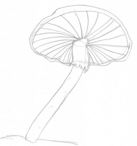 Pilze zeichnen: Beispiel 1