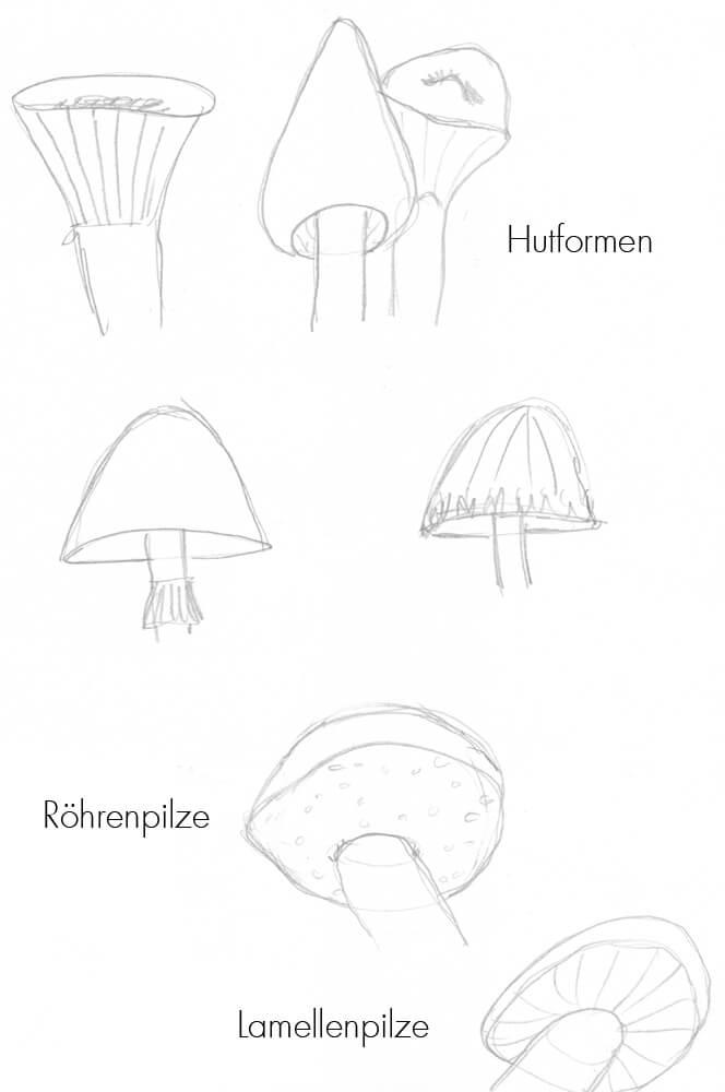 optische Merkmale von Pilzen