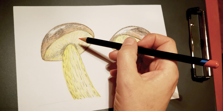 Verschiedene Pilze zeichnen