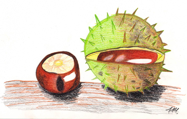 Fertige Kastanien-Buntstiftzeichnung