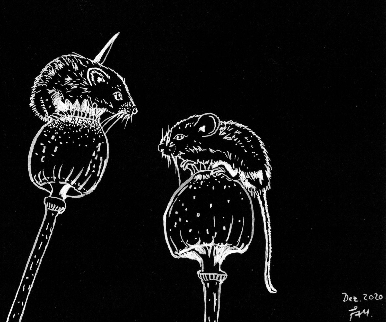 Mäuse in schwarz/weiß