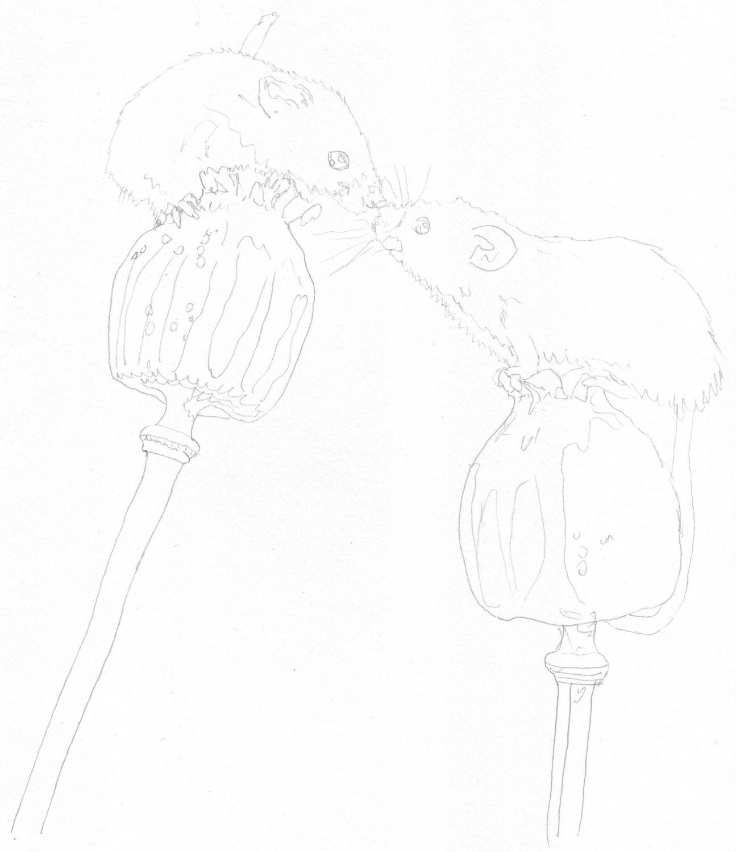Mäuse auf Mohnblume: Bleistiftskizze