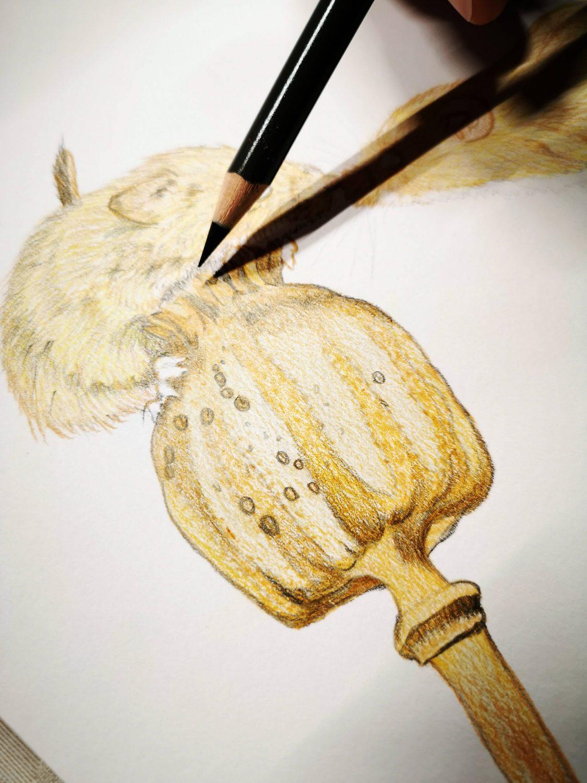 Mäuse Buntstiftbild - Hintergrund Felldetails zeichnen
