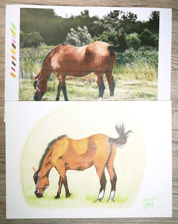 Pferd zeichnen: Pferdezeichnung und Fotovorlage im Vergleich