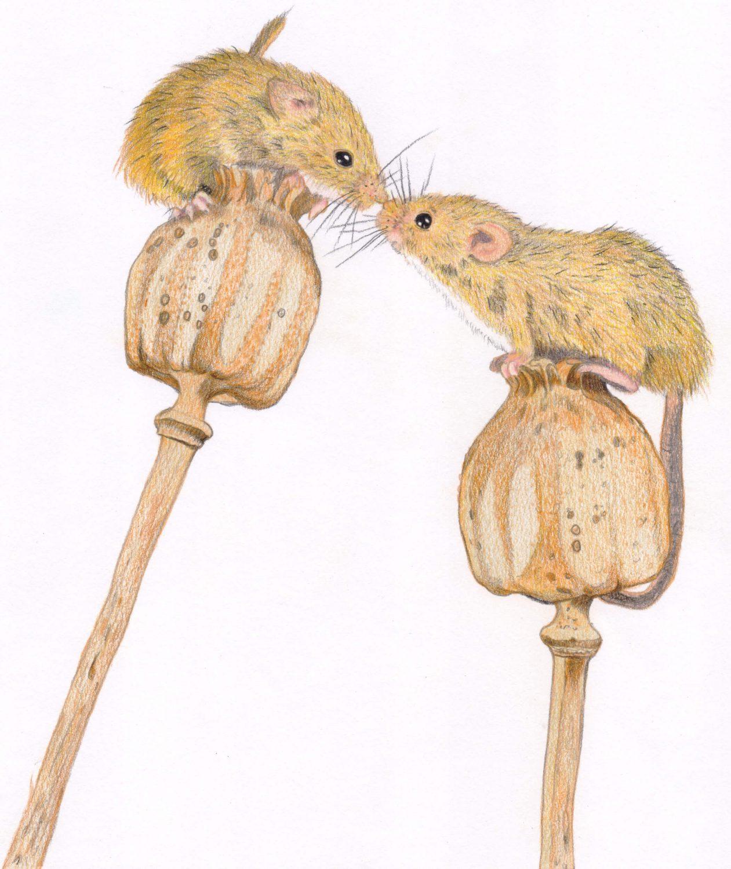 Schrittanleitung: Mäuse fertig gezeichnet